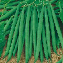 PROFI, Vegetable SEMO - Bean - dwarf Gama, p0902 (Phaseolus vulgaris L.var. nanus (L.) Aschers.)
