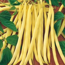 PROFI, Vegetable SEMO - Bean - dwarf Aidagold, p0913 (Phaseolus vulgaris L.var. nanus (L.) Aschers.)