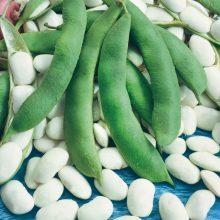 PROFI, Vegetable SEMO - Bean - dwarf Albena, p0944 (Phaseolus vulgaris L.var. nanus (L.) Aschers.)