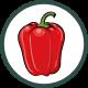 Roubování paprik