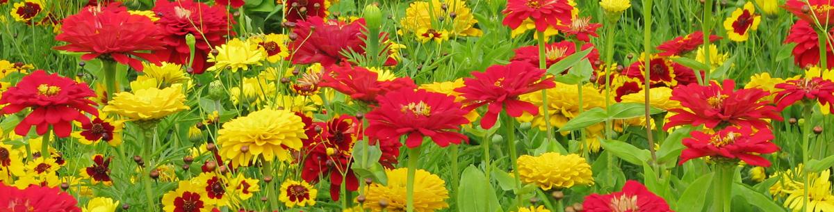 Kolekce Květinový koberec
