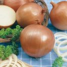 HOBBY, Zelenina – Cibule kuchyňská Klaria, 0525