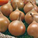 HOBBY, Zelenina – Cibule kuchyňská Aeneus F1, 0526