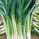 HOBBY, Zelenina – Pór pravý Bystrín F1, 2902