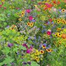 HOBBY, Květiny trvalky – Víceletá směs pro opylovače, 9979