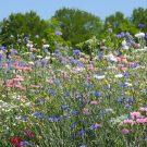 HOBBY, Květiny letničky – Pastelová romance, 9981