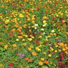 HOBBY, Květiny letničky – Tisíce světel, 9982