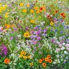 HOBBY, Květiny trvalky – Pestré léto, 9983