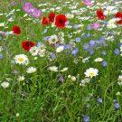 HOBBY, Květiny trvalky – Květena venkova, 9984