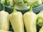 Osivo a semena zeleniny - novinky 2020/21 - Paprika roční Amykus F1 (2593)