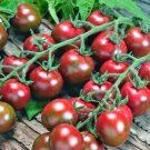 Novinky v sortimentu - široký výběr osiva a semen zeleniny, bylinek, květin letniček a trvalek z naší produkce