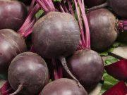 Hobby novinky v sortimentu - Řepa salátová Redshine (3512)