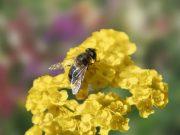 Hobby novinky v sortimentu - Směs pro včely (9945)