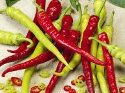 Hobby novinky v sortimentu 2017/18 - Paprika roční sladká Spiralus (2512)
