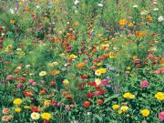 Nové kolekce osiva Květinový koberec a Květiny k řezu - novinky 2019/20