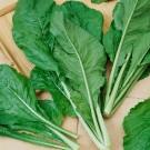 HOBBY, Zelenina – Hořčice čínská Komatsuna, 0111