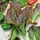 HOBBY, Zelenina – Hořčice čínská Red Giant, 0112