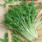 HOBBY, Zelenina – Mizuna, 0125