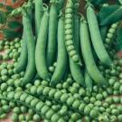 HOBBY, Zelenina – Hrách setý dřeňový Junos, 1003
