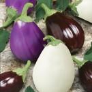 HOBBY, Zelenina – Lilek vejcoplodý Směs barev, 1912