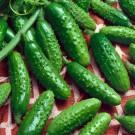 HOBBY, Zelenina – Okurka setá nakládačka Blanka F1, 2305