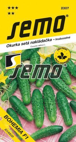 HOBBY, Zelenina - Okurka setá nakládačka Bohemia F1, 2307 (Cucumis sativus L.)