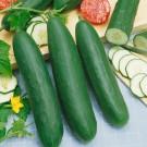 HOBBY, Zelenina – Okurka setá salátová Linda F1 Mix, 2402