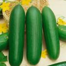 HOBBY, Zelenina – Okurka setá salátová hadovka Paladinka F1, 2413