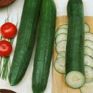HOBBY, Zelenina – Okurka setá salátová hadovka Superstar F1, 2415
