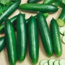 HOBBY, Zelenina – Okurka setá salátová hadovka Formule F1, 2418