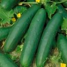 HOBBY, Zelenina – Okurka setá salátová Lili F1, 2420