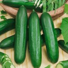 HOBBY, Zelenina – Okurka setá salátová hadovka Emilie F1, 2422
