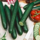 HOBBY, Zelenina – Okurka setá salátová hadovka Tribute F1, 2423