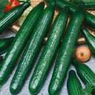 HOBBY, Zelenina – Okurka setá salátová hadovka Orca F1, 2424