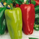HOBBY, Zelenina – Paprika roční Rubinova, 2503