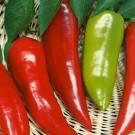 HOBBY, Zelenina – Paprika roční Lydia, 2511