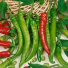 HOBBY, Zelenina – Paprika roční Pálivec, 2516