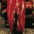 HOBBY, Zelenina – Paprika roční Alceo F1, 2524