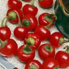 HOBBY, Zelenina – Paprika roční Korál, 2551