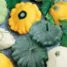 HOBBY, Zelenina – Patizon Směs barev, 2721