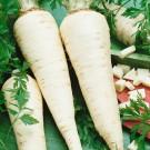 HOBBY, Zelenina – Petržel zahradní kořenová Jadran, 3005