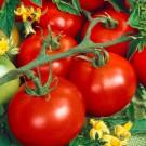 HOBBY, Zelenina – Rajče tyčkové Tornádo F1, 3202