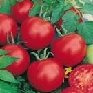 HOBBY, Zelenina – Rajče tyčkové Tipo F1, 3204