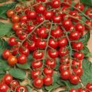 HOBBY, Zelenina – Rajče tyčkové Mini, 3275