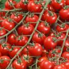 HOBBY, Zelenina – Rajče tyčkové Bibi, 3276