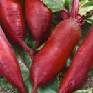 HOBBY, Zelenina – Řepa salátová Monorubra, 3504