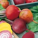 HOBBY, Zelenina – Řepa salátová směs barev, 3541