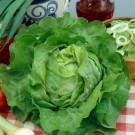 HOBBY, Zelenina – Salát hlávkový Mars, 3832