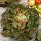 HOBBY, Zelenina – Salát hlávkový Červánek, 3837