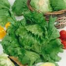 HOBBY, Zelenina – Salát hlávkový Maximo, 3855